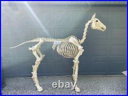 6 ft Life Size Standing Skeleton Horse Halloween Prop Decor Glowing Eyes