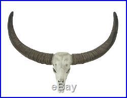 Spectacular Long Horn Skull